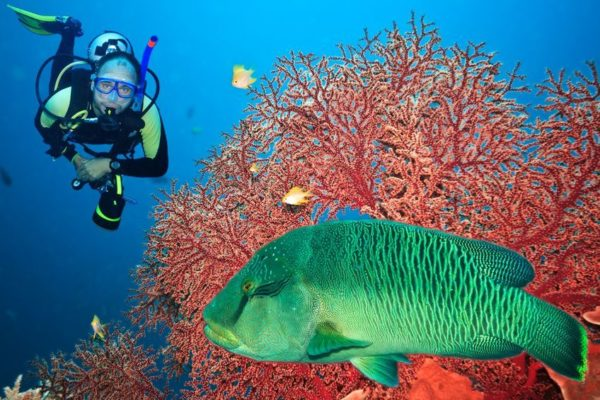 Can I Go SCUBA Diving After Sinus Surgery?